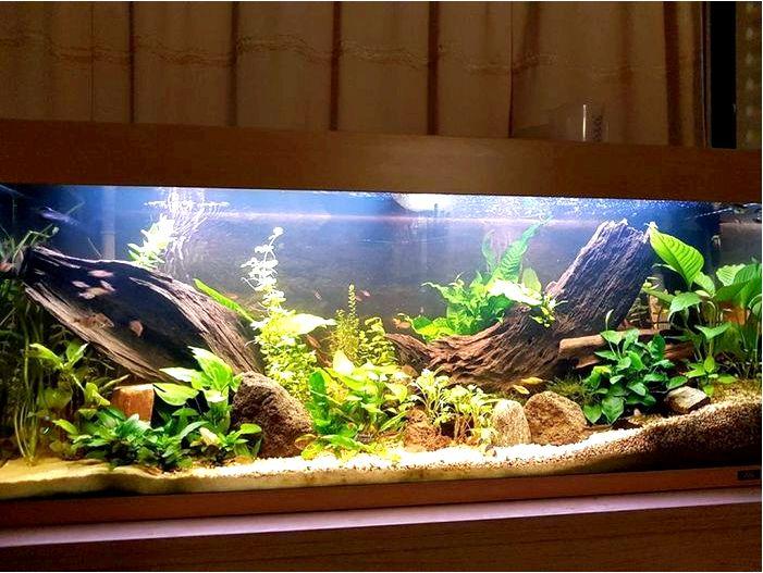 240Л аквариум в натуральном стиле
