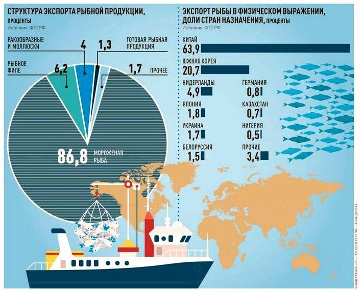 Ешьте больше минтая и меньше кальмаров, чтобы сохранить рыбные запасы, призывает благотворительная организация